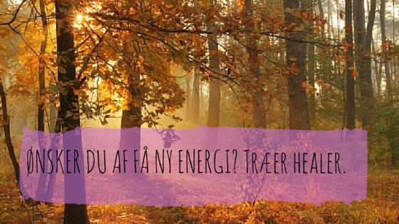Ønsker du at få ny energi? Brug træernes energi